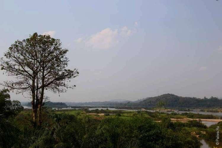 Дерево на фоне зеленых холмов