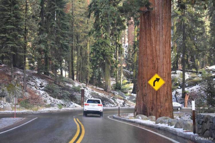 парк секвойя калифорния