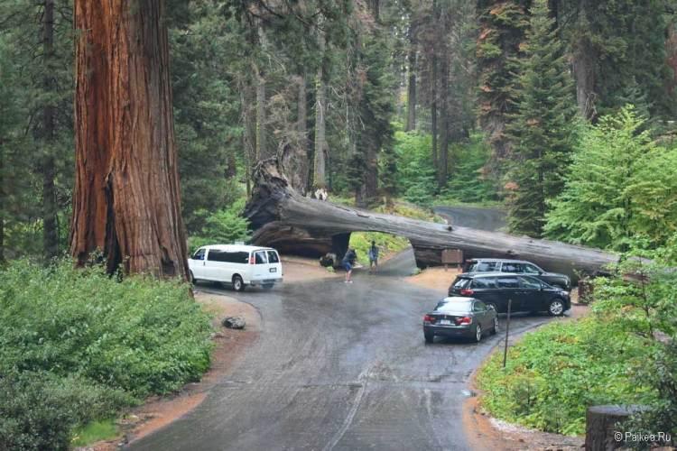 туннель в дереве