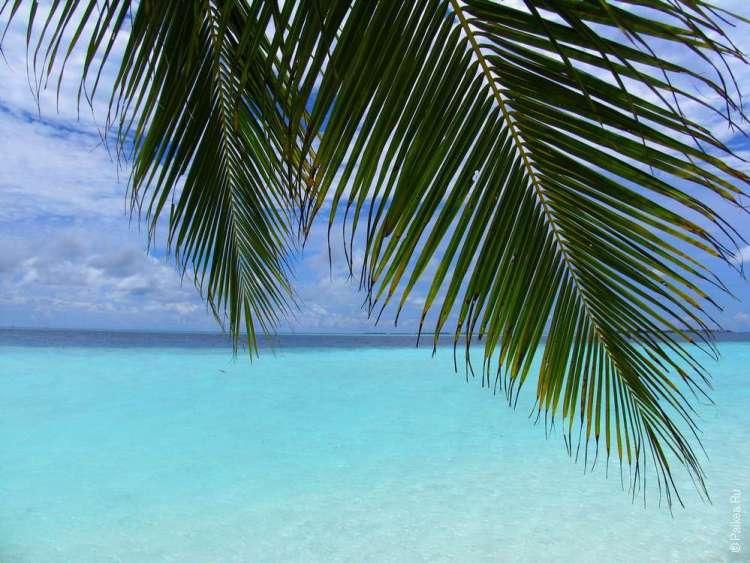 Когда ехать на Мальдивы