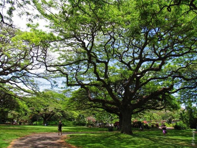 Гавайи природа