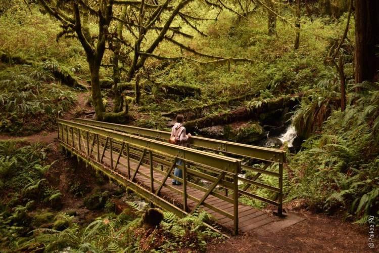 парк редвуд водопад