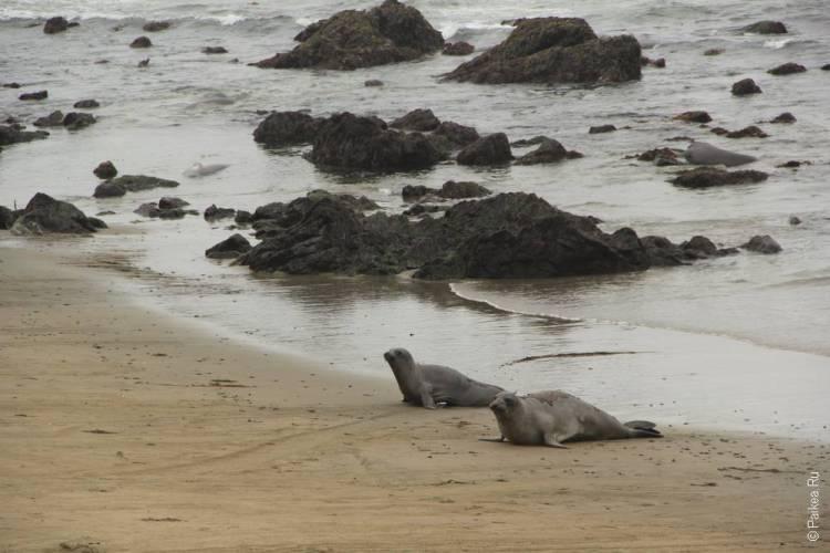 сан симеон калифорния морские котики