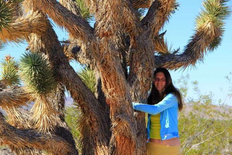 Пустыня Мохаве США joshua tree