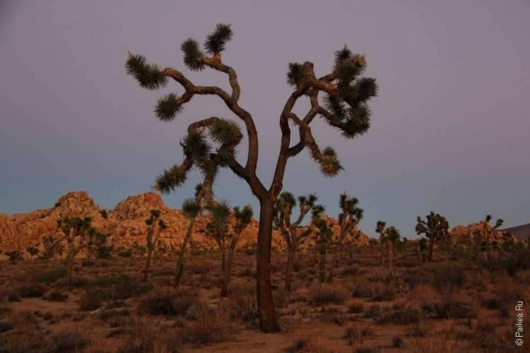 Закаты в парке Джошуа Три, Калифорния, США