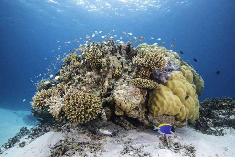 мальдивы кораллы