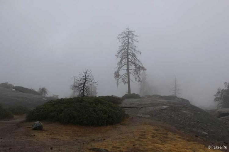 парк секвойя туман