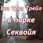 парк секвойя трейл