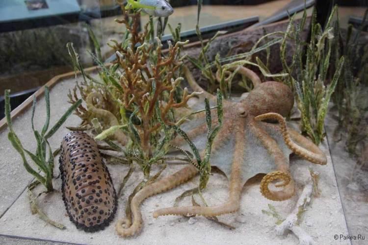 Подводный мир Флориды