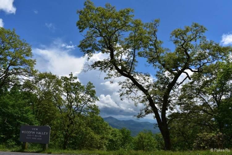Прогулка по лесам книга Билл Брайсон отзыв