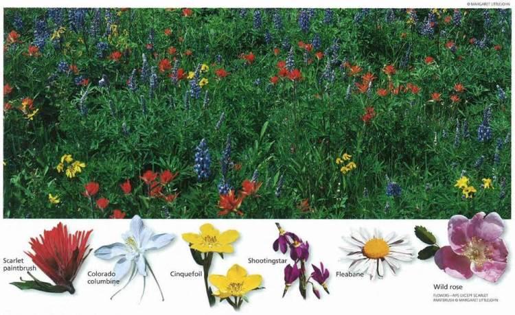Сидар Брейкс цветы