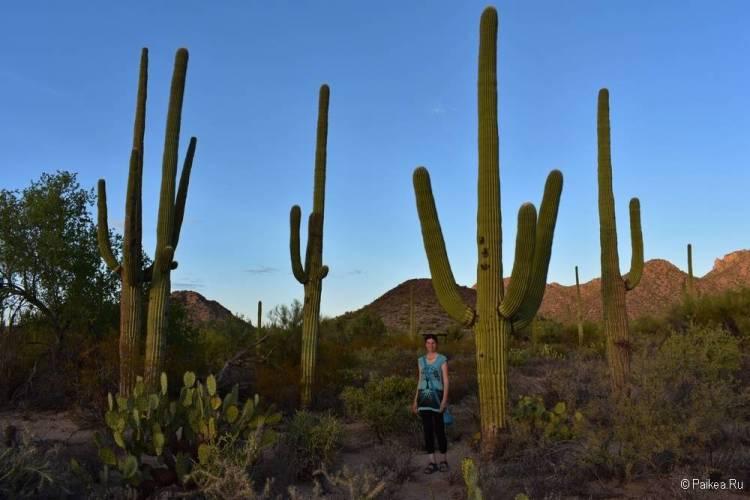 Сагуаро парк (Saguaro National Park) 25