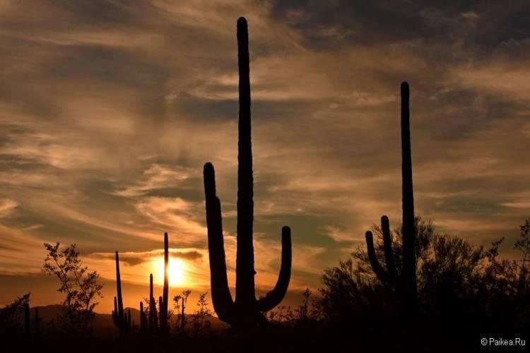 Сагуаро парк (Saguaro National Park) 27