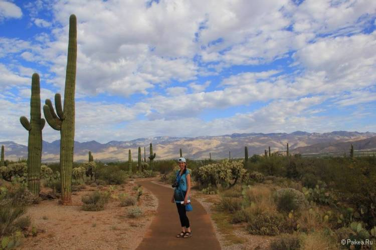 Сагуаро парк (Saguaro National Park) 39