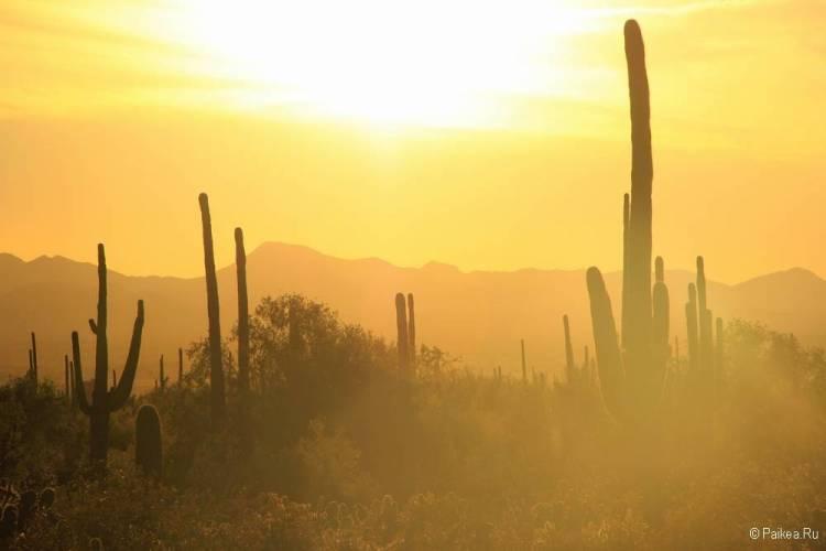 Сагуаро парк (Saguaro National Park) 41