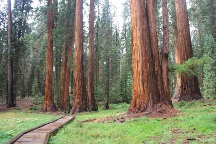 поездка в калифорнию что посмотреть секвойя