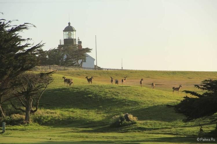 пасифик гроув маяк