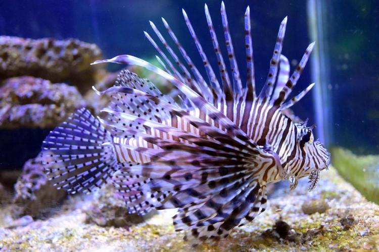 парк джон пеннекамп корал риф / john pennekamp coral reef state park 16