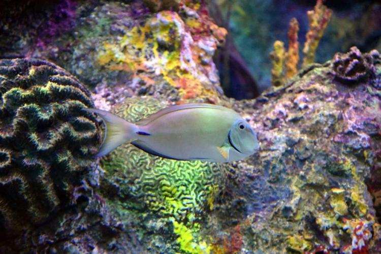парк джон пеннекамп корал риф / john pennekamp coral reef state park 19