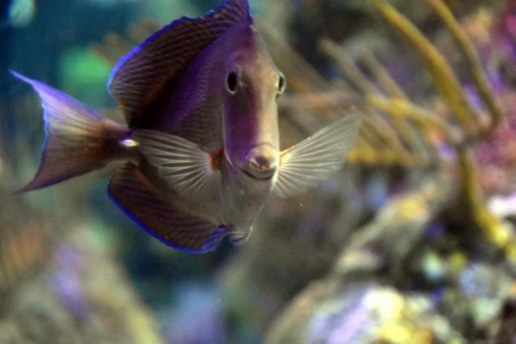 парк джон пеннекамп корал риф / john pennekamp coral reef state park 21