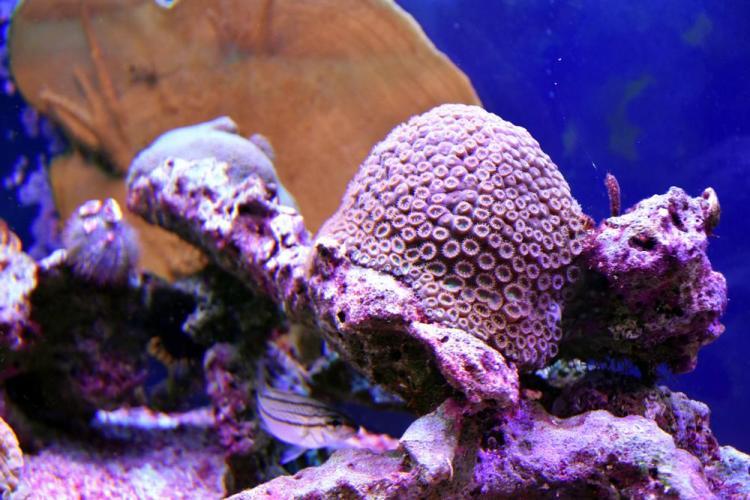 парк джон пеннекамп корал риф / john pennekamp coral reef state park 26