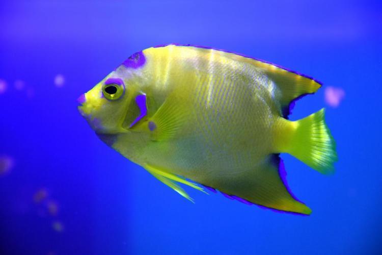 парк джон пеннекамп корал риф / john pennekamp coral reef state park 29