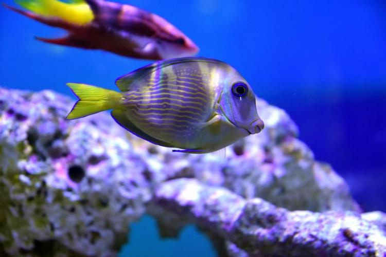 парк джон пеннекамп корал риф / john pennekamp coral reef state park 30