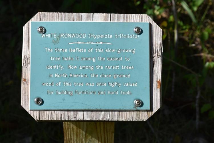 парк джон пеннекамп корал риф / john pennekamp coral reef state park 71