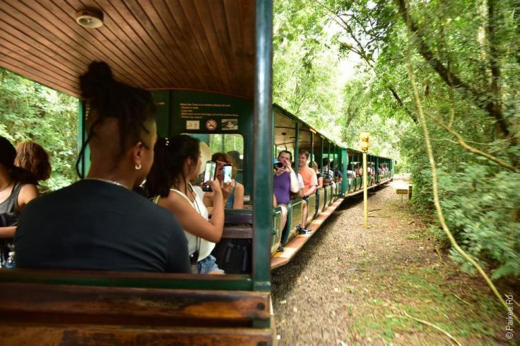 национальный парк игуасу 33