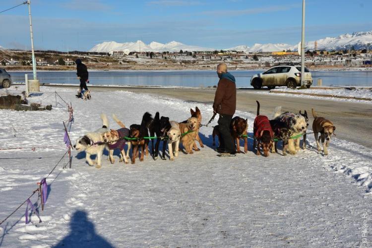 ушуайя выгул собак