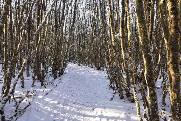 ушуайя лес зимой