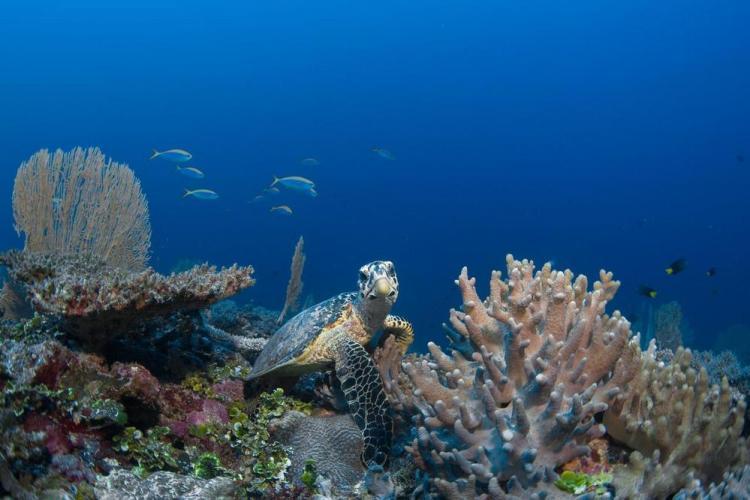 отдых на мальдивах рифы