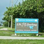Динг Дарлинг / Ding Darling National Wildlife Refuge