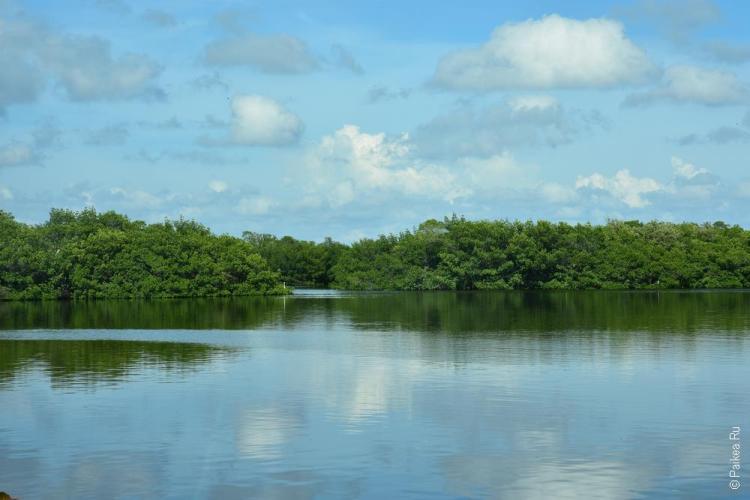 заповедник динг дарлинг на острове санибел, флорида, сша / ding darling national wildlife refuge 63