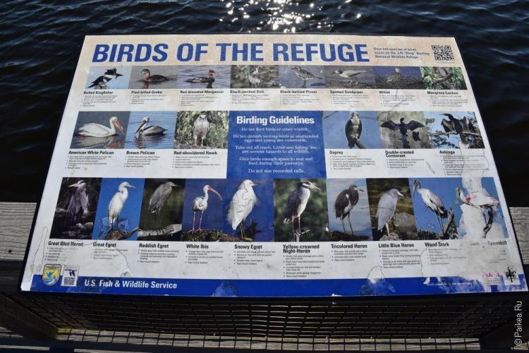 заповедник динг дарлинг на острове санибел, флорида, сша / ding darling national wildlife refuge 64