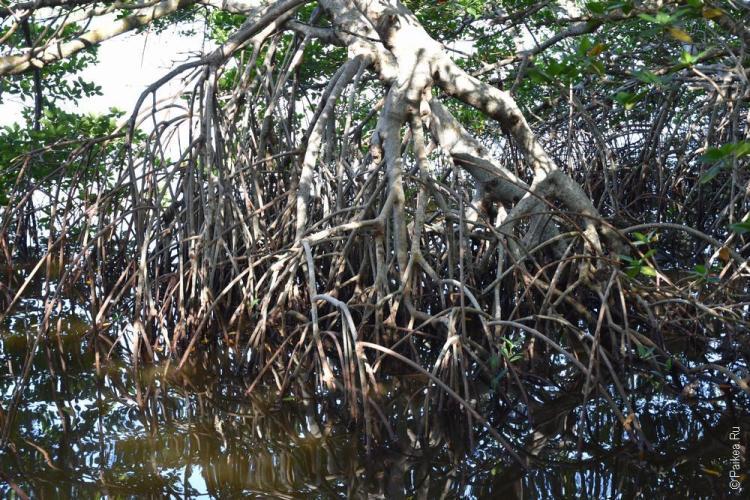 заповедник динг дарлинг на острове санибел, флорида, сша / ding darling national wildlife refuge 67
