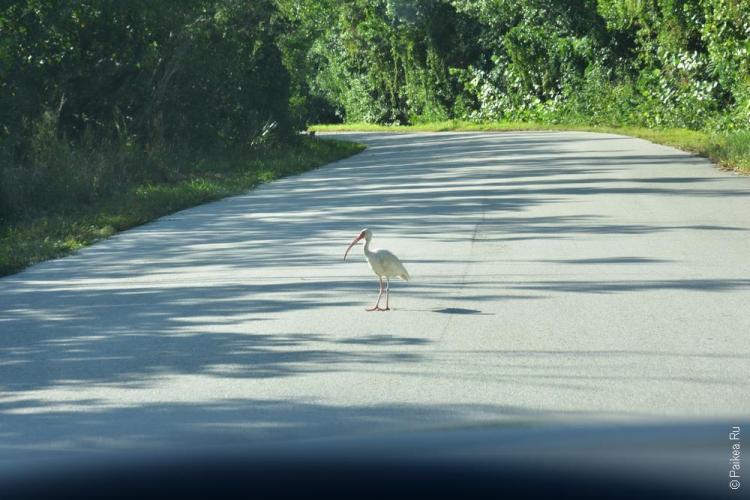 заповедник динг дарлинг на острове санибел, флорида, сша / ding darling national wildlife refuge 70