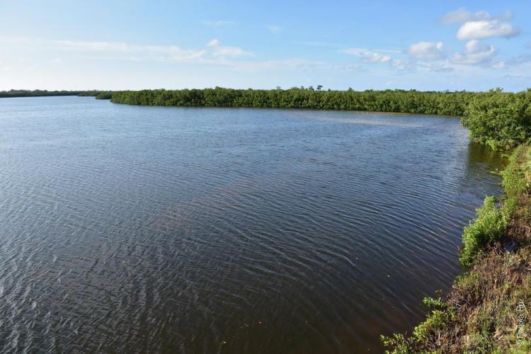 заповедник динг дарлинг на острове санибел, флорида, сша / ding darling national wildlife refuge 74