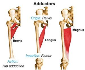 Adductor Tendinitis