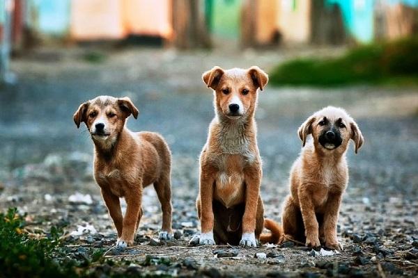 Abandono de animais nas ruas se torna um problema social em Porto Velho