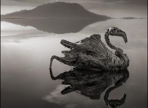 Lago mortífero transforma animais em pedra