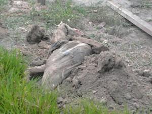 Corpo é retirado dentro de um poço