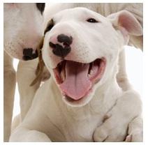 Como cuidar da higiene bucal de seu animal