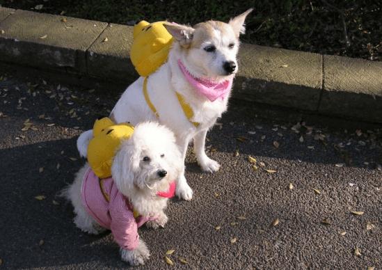 Cuidados ao viajar com o seu animal de estimação no carro