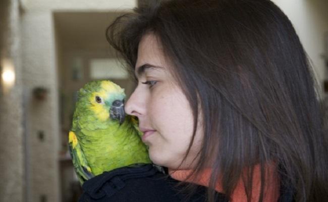 Quer comprar um papagaio?