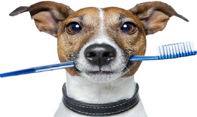 Saiba como cuidar dos dentes do seu pet