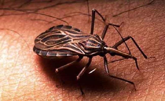 LACEN investiga caso de doença de Chagas em paciente
