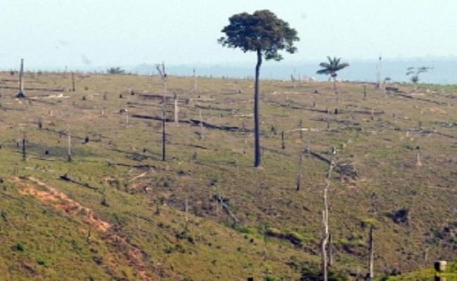 MPF investiga JBS e empresas da família Maggi sobre repasses a desmatadores