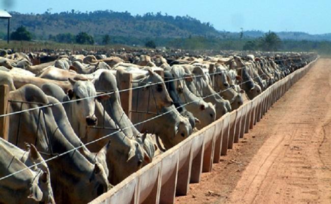 Madeira perde espaço para a pecuária em Rondônia