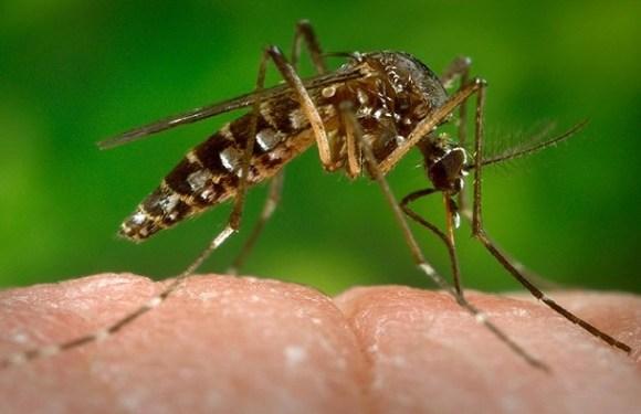 Minas Gerais confirma 83 mortes por febre amarela
